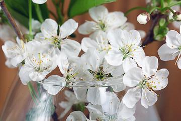 cherry blossom aroma