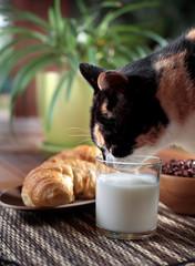 Colazione con latte e gattina