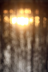 bokeh blurred background forest