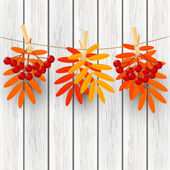 Autumn leaves with rowan on wooden background