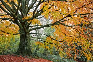 Beautiful autumn trees.