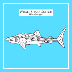 Whale Shark sketch on blue background