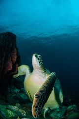turtle  wide angle