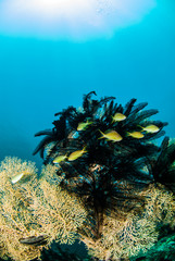 fish yellow gorgonia wide angle