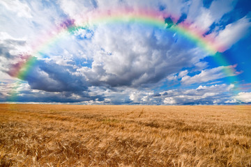 Rainbow over field of wheat