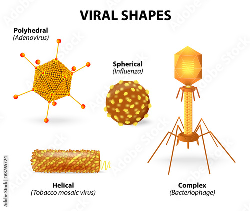 Shapes of viruses - 68765724