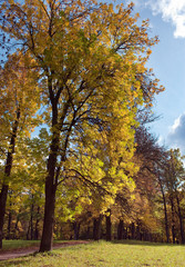 Russia,Gatchina, bright autumn tree in park