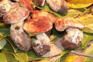 festa del fungo e del tartufo savigno bologna