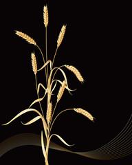 Wheat ears sheaf