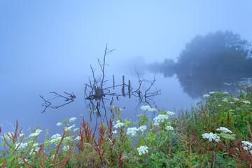foggy morninh on wild lake