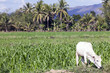 canvas print picture - Felder und Landschaft von Mae Sariang