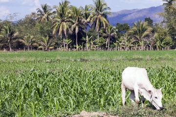 Felder und Landschaft von Mae Sariang
