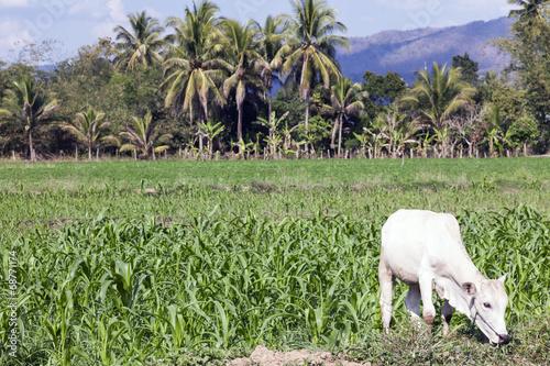 canvas print picture Felder und Landschaft von Mae Sariang