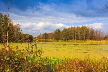 Autumn day on bog