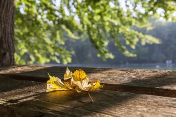 Einzelnes Blatt auf einer Parkbank im Herbst