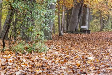 Parkbank in einem Wald im Herbst