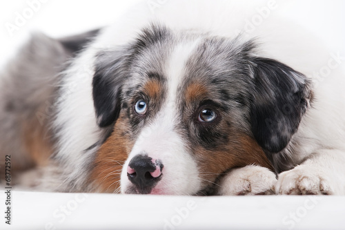 canvas print picture Hund