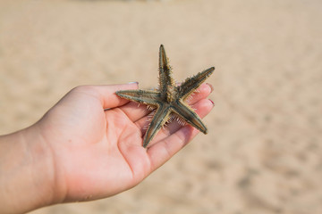 Wet woman hand holding red five point starfish.