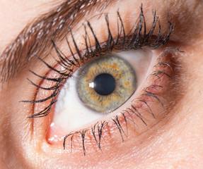 female eye. close-up