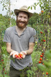 young bearded  boy farmer who gathers tomatoes from plants - 68777329