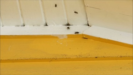 Wasp nest in a house eaves