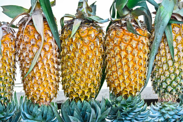 Pineapple Fruit Display For Sell On Small Street In Malwana