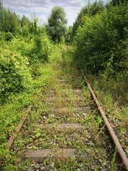 Überwuchertes Bahngleis