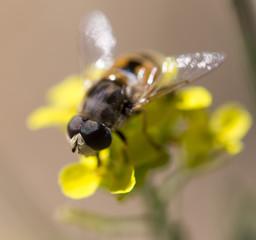 bee on nature. macro