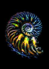Colorful iridescent ammonite fossil