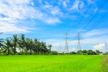 electricity high voltage power pylon in paddy field