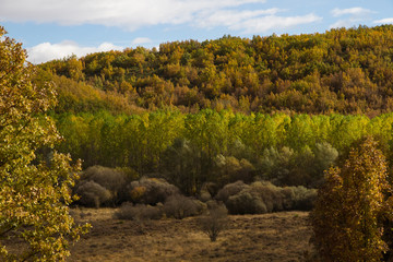 Autumn Landscape Forest Oaks, Poplars and Bushes