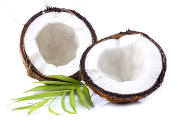 Coconuts with leaves on a white