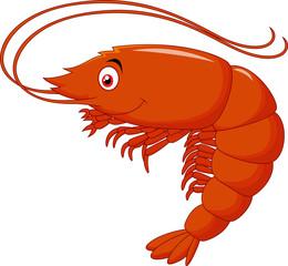 Cute shrimp cartoon