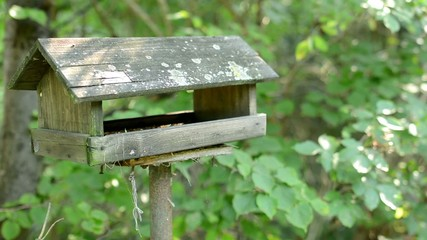empty birdhouse - feeding for birds - green trees in background
