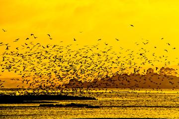 A lot of bird flying at Rotorua lake, New zealand
