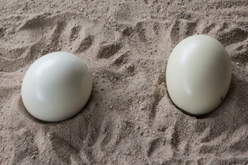 Two ostrich eggs on the sand