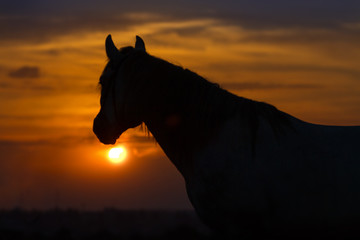 Horse against sunrise