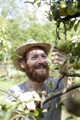 young hipster bearded boy farmer who gathers pears from tree