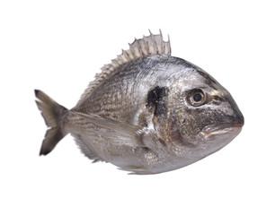 Dorado fish isolated on white background