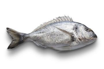 Dorado fish isolated on white background, with path