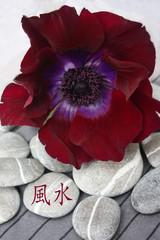 FENG SHUI   風水