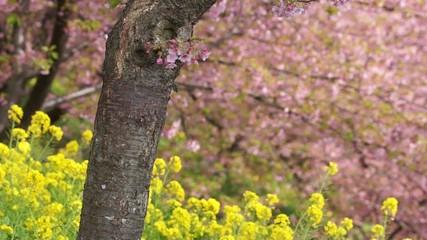 早春の松田山