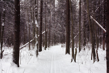 trails in the winter woods
