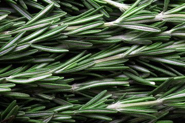seasoning fresh rosemary