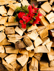Weihnachtsstern am Holzstapel