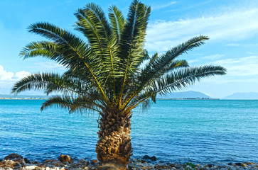 Palm tree on summer beach (Greece)