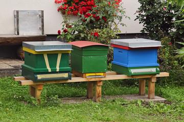 ruches dans jardin particulier