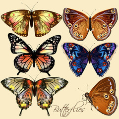 Collection of vector colorful butterflies in vintage style