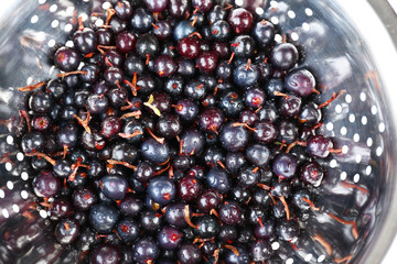 Black currants in colander, close-up