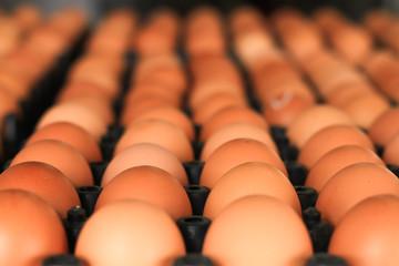 Fresh eggs from farm